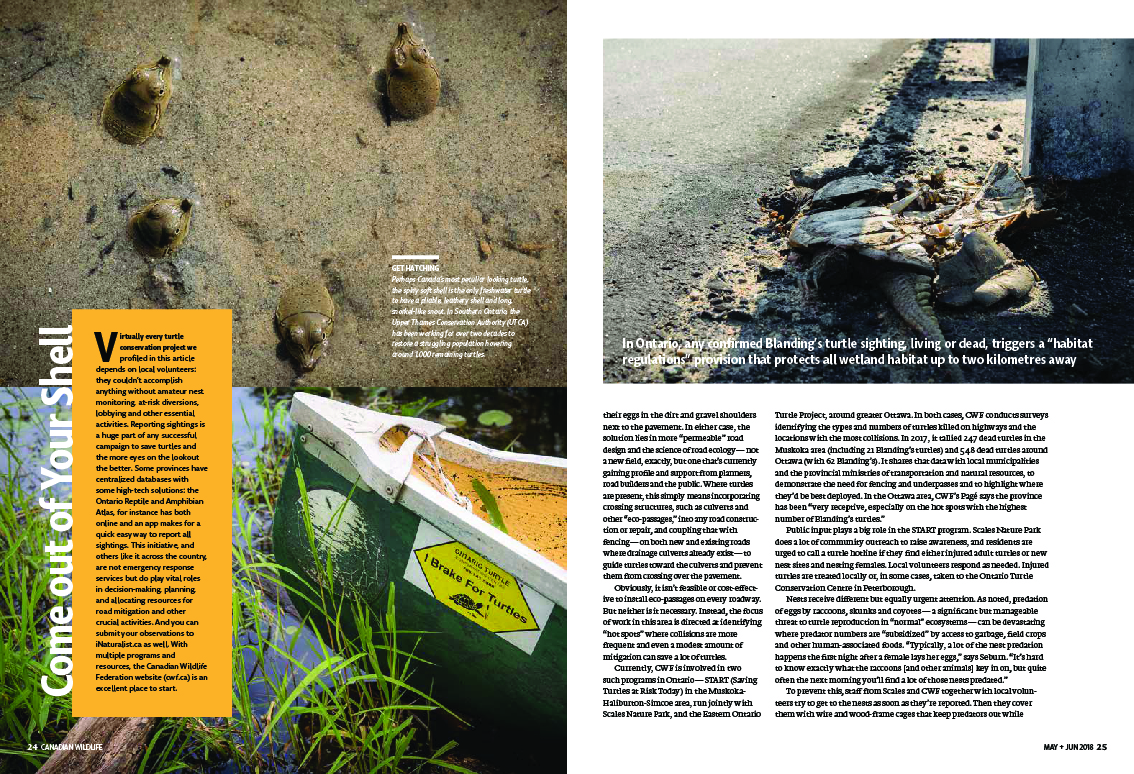 Canadain Wildlife Magazine may/june issue slow and steady