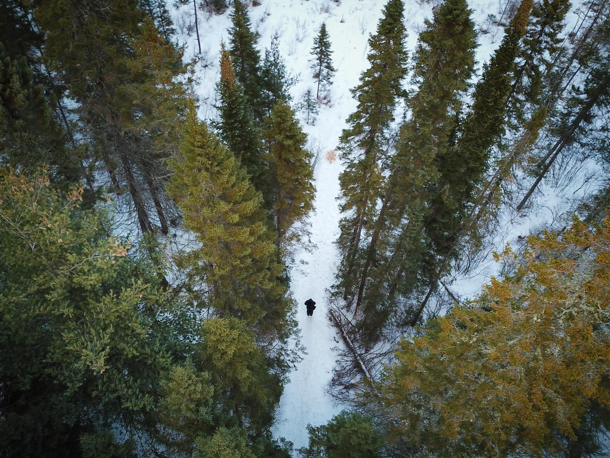 Aerial view of person standing amongst trees in winter - David Coulson © David Coulson