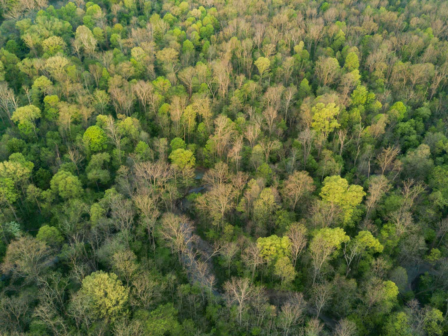 Aerial view of the hundreds of trees in Sydenham Forest at Ontario Nature
