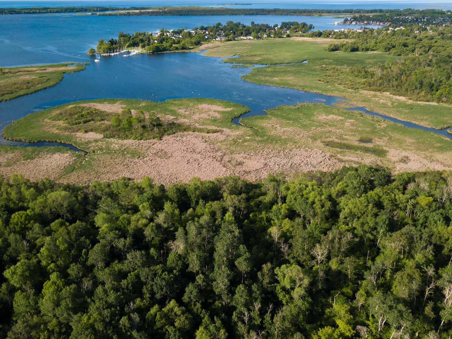 Aerial view of a forest and wetland on the coast of Lake Ontario in Brighton