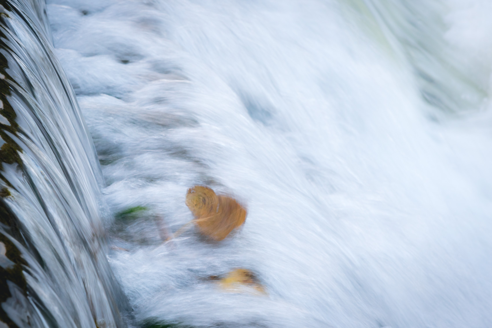 Tumbling fall leaf in small waterfall in Ontario
