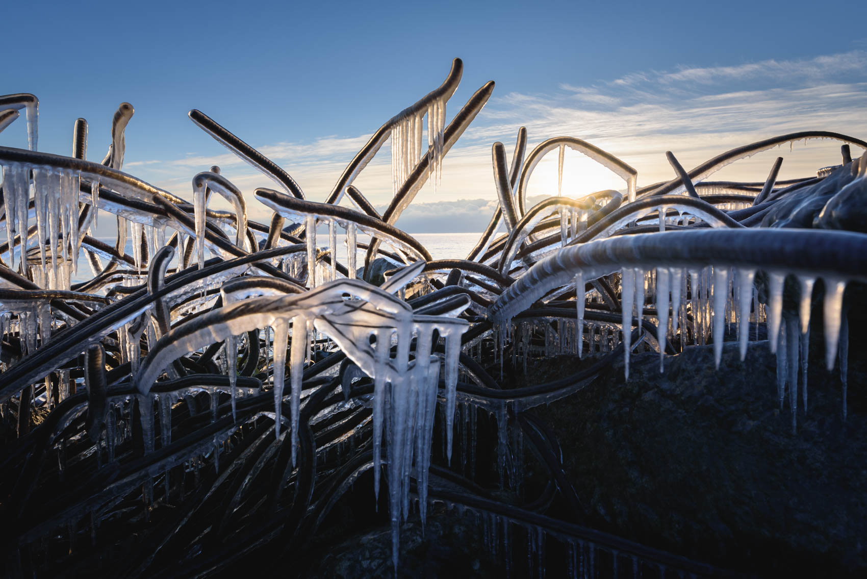 Iceicles on frozen rebar at Tommy Thompson Park in winter