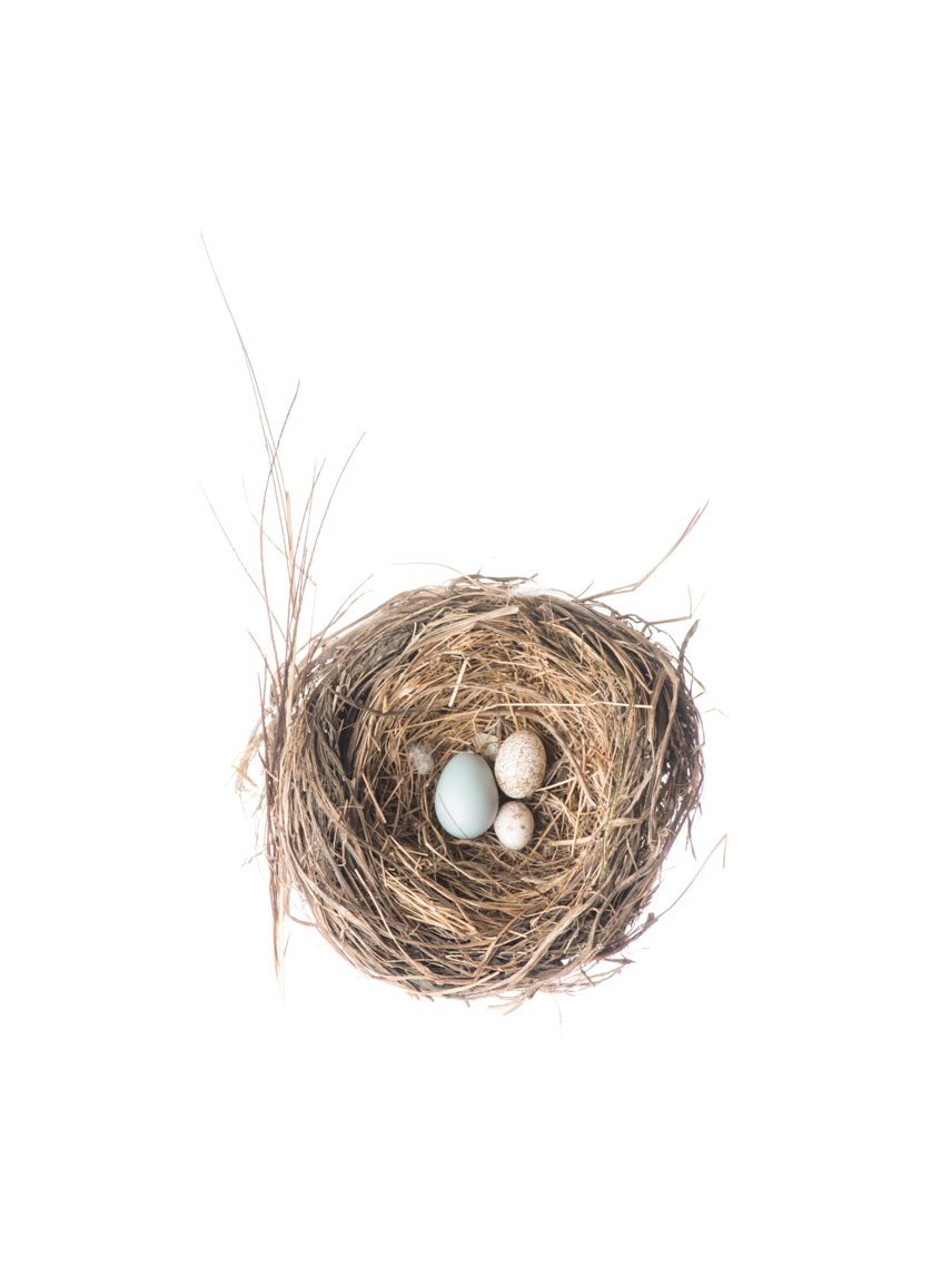 Bird Nest, Royal Ontario Museum specimen © David Coulson