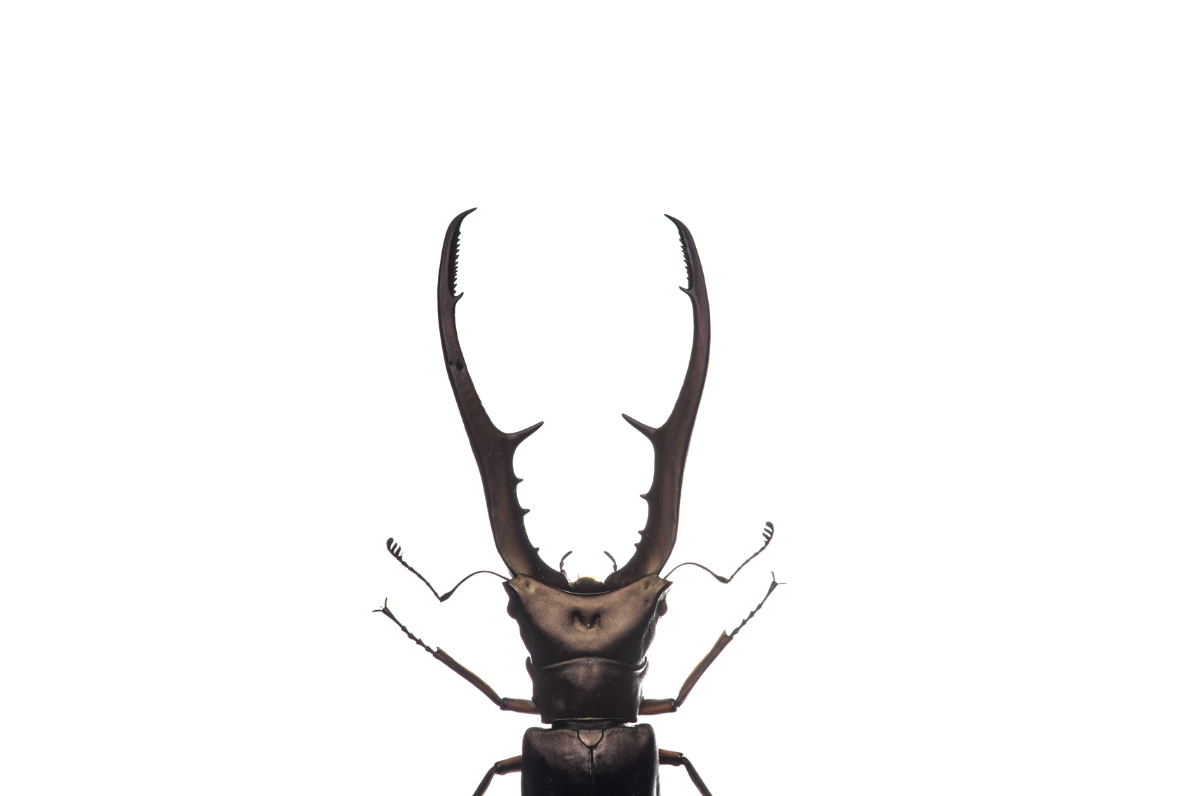 Beetle, Royal Ontario Museum specimen © David Coulson