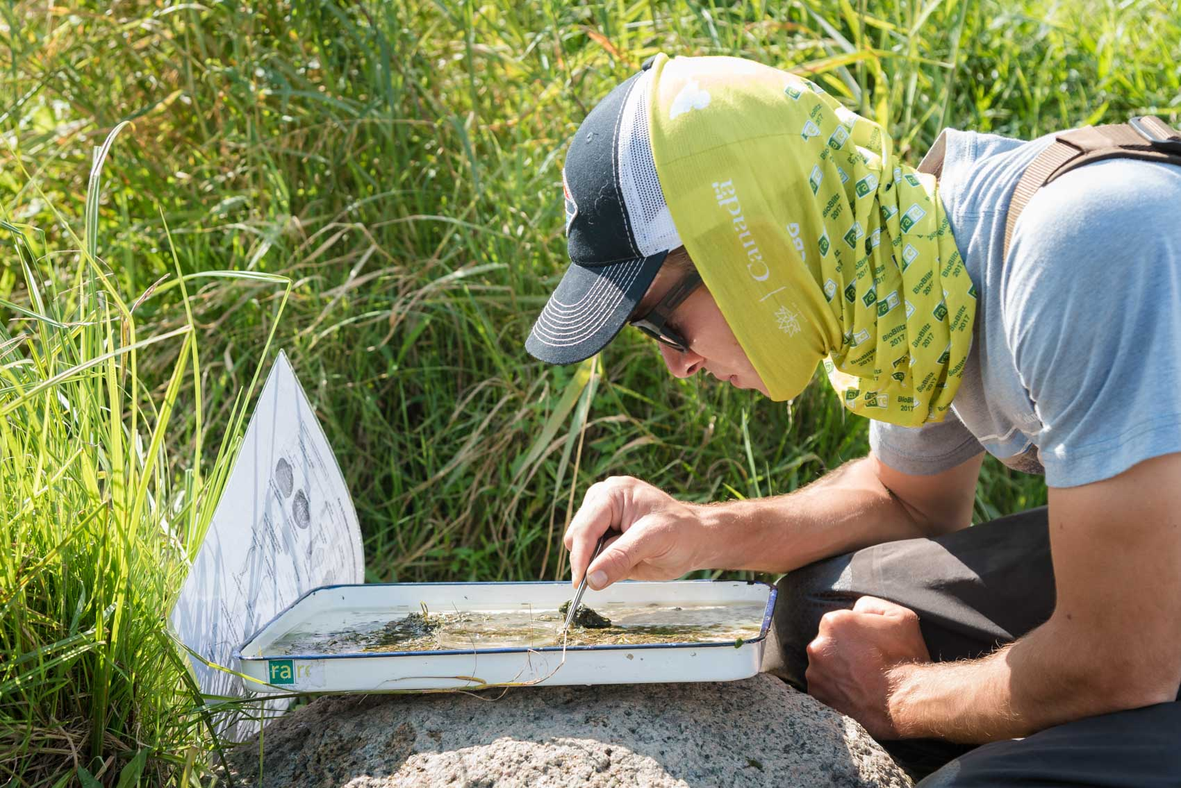 A researcher looking for clams in a tray at a BioBlitz