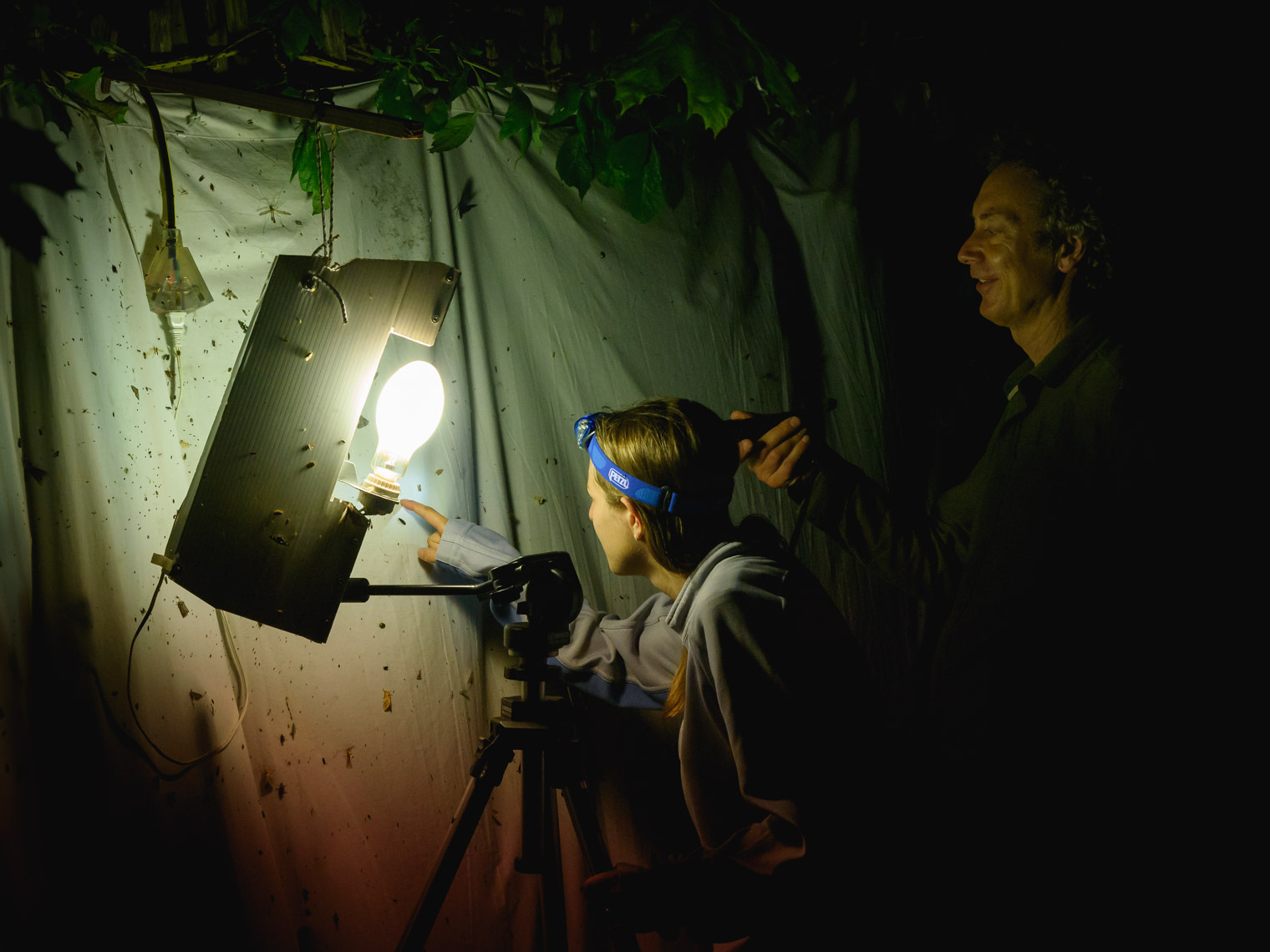 Two people using a white sheet and light to look a moths at night