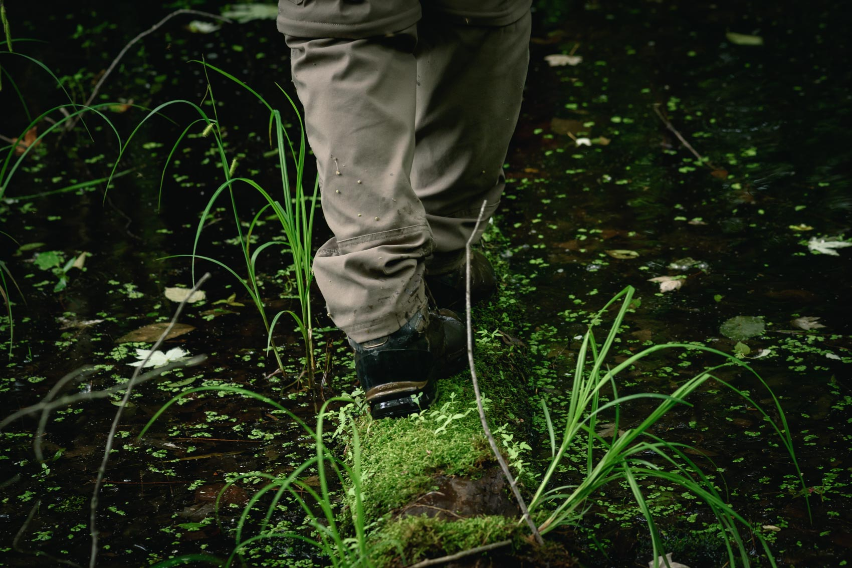 A boot walking across a mossy log in a swamp