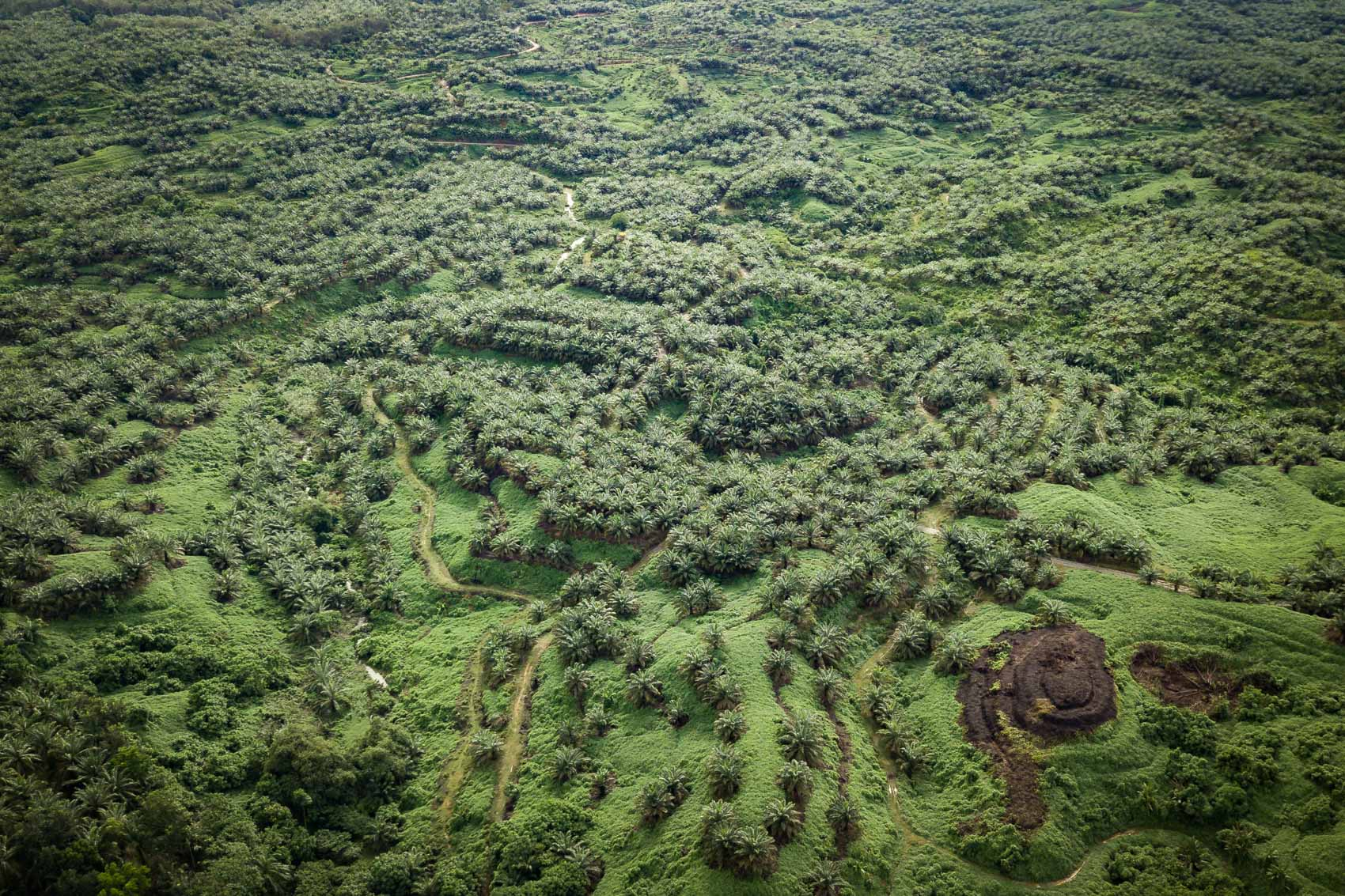 An aerial view of a palm oil plantation in Northern Sumatra, Indonesia © David Coulson conservation photojournalist