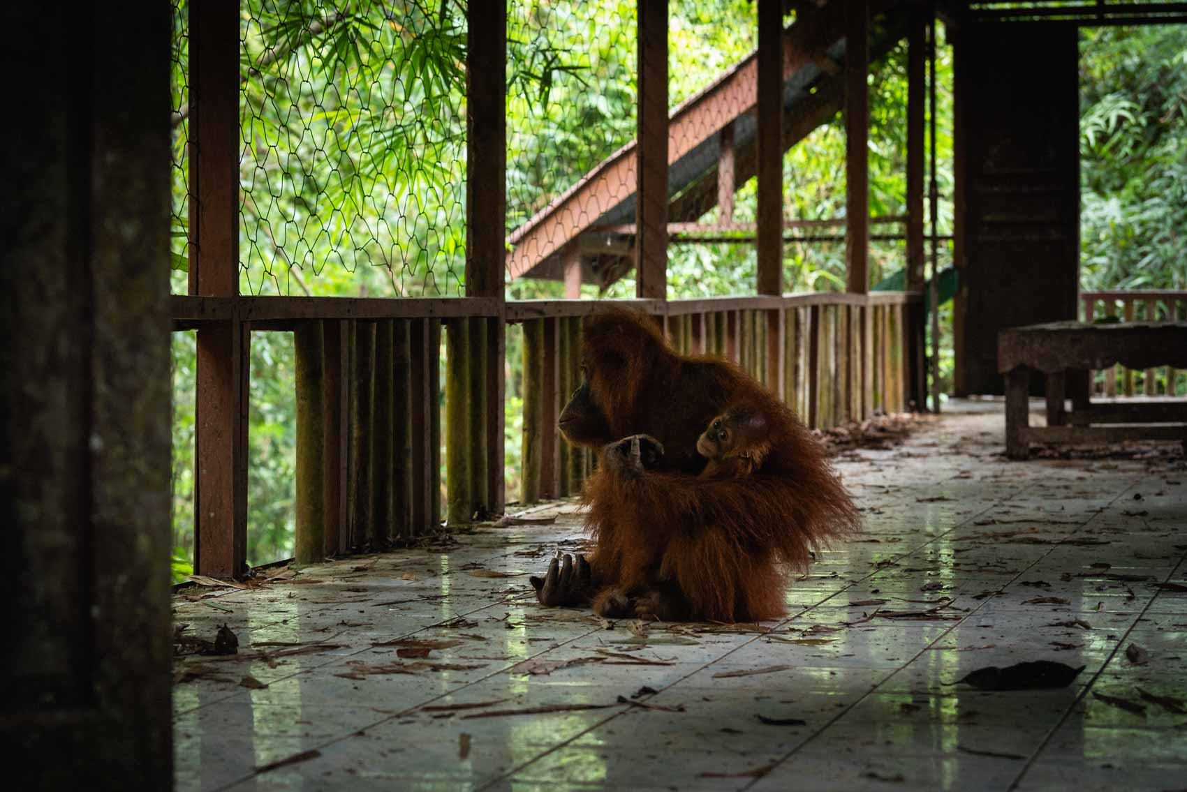 Website2019_David_Coulson_Stories-PalmOil-15