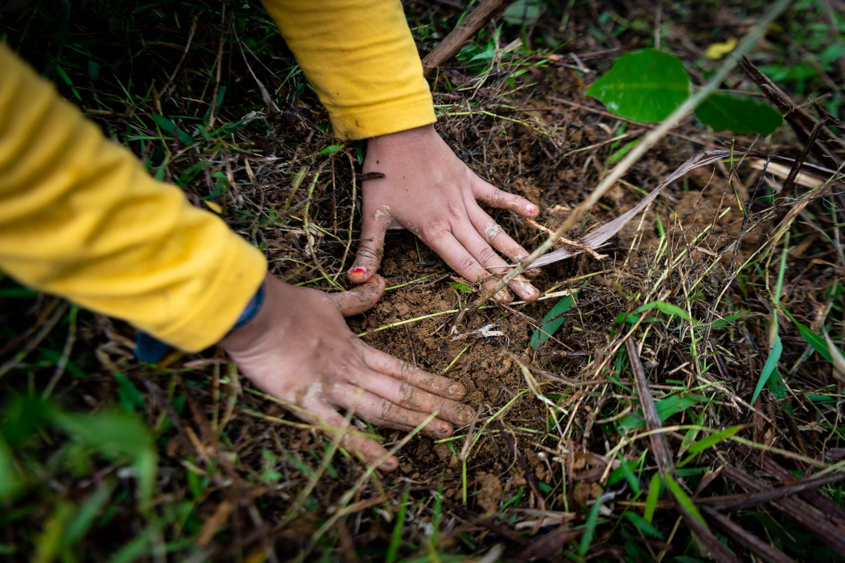 Hands pat the ground after planting a tree at the Orangutan Information Centre Cinta Raja restoration site