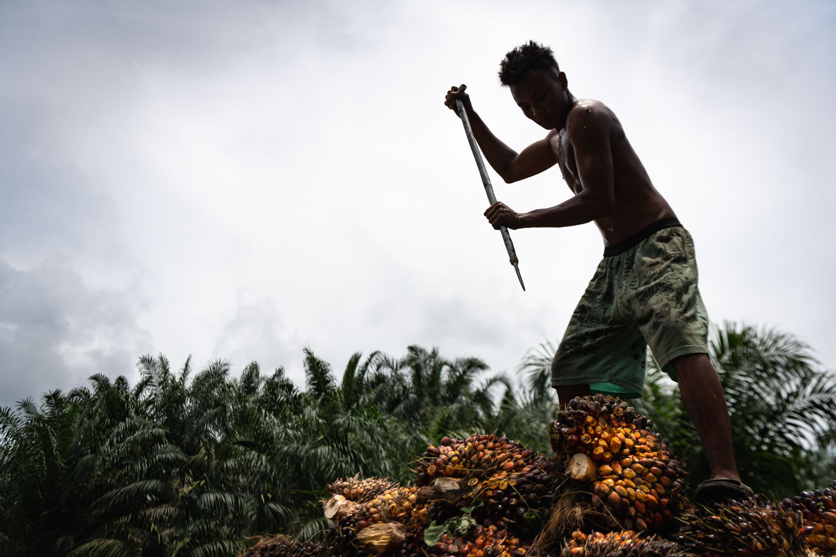 Website2019_David_Coulson_Stories-PalmOil-3