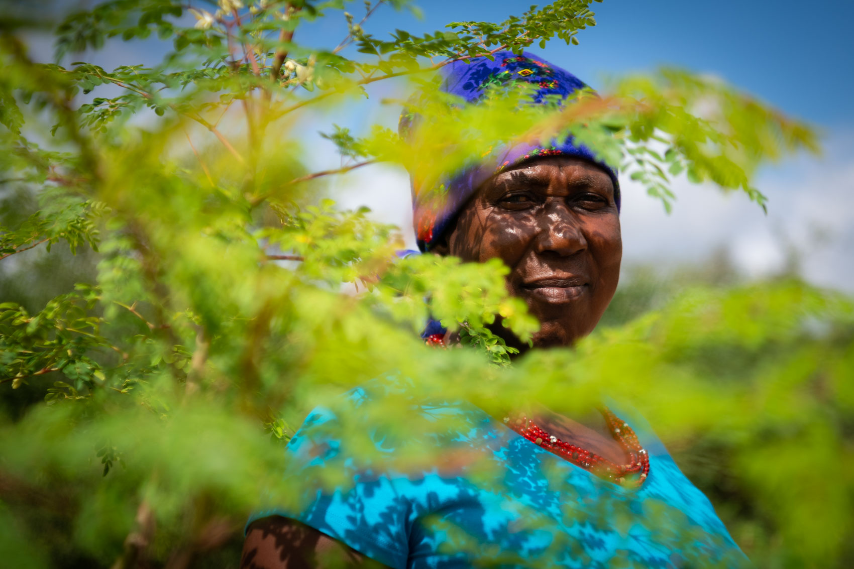 A granny looks through a moringa tree at Nourish eco village in South Africa