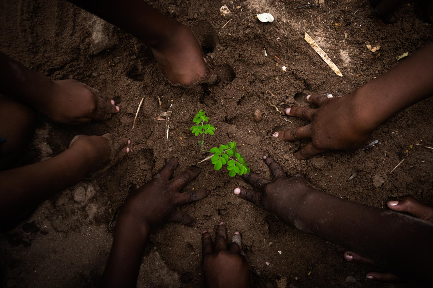 Children hands padding the dirt while planting © David Coulson conservation photographer