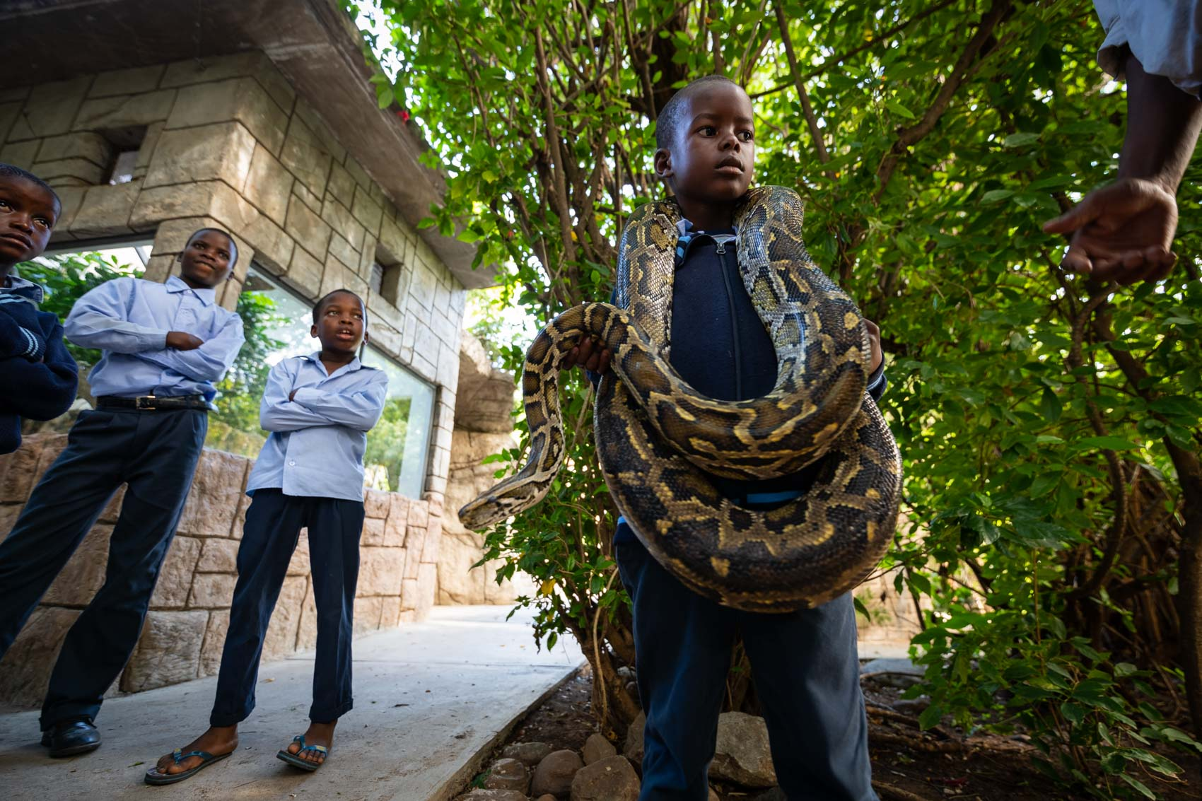 An african school boy holds a python next two classmates at Kinyonga Reptile Center in South Africa