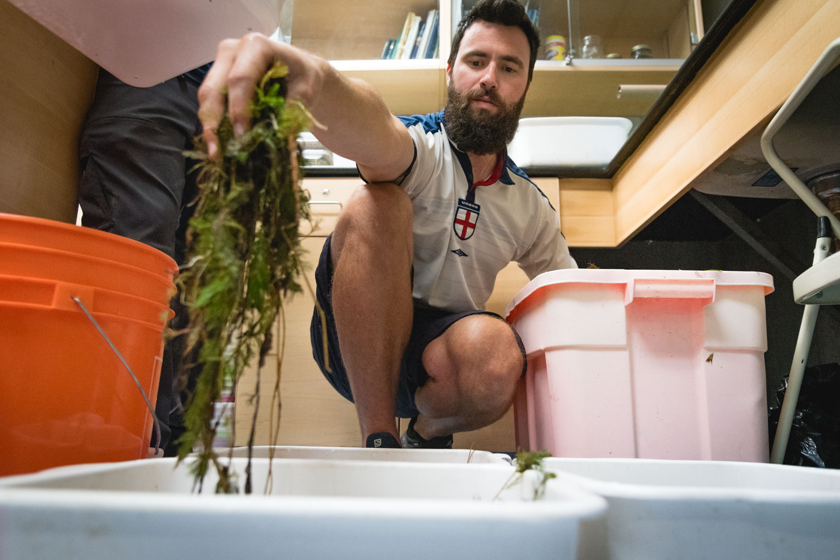 A research assistant puts moss and seaweeds into a plastic tub at Upper Thames River Conservation Authority